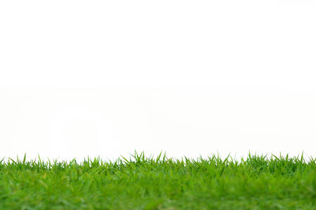 Green grass meadow field isolated on white background Stock Photo