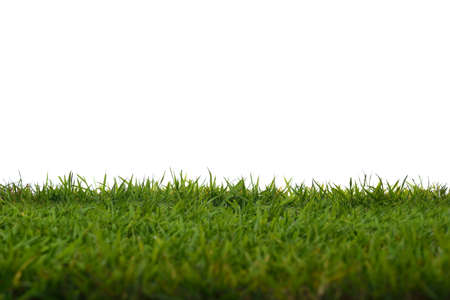 Green grass meadow field isolated on white background Stok Fotoğraf