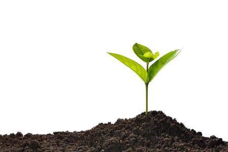 토양에서 밖으로 성장하는 녹색 새싹 흰색 배경에 고립 스톡 콘텐츠