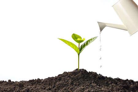 Sprout innaffiato da un annaffiatoio può isolato su sfondo bianco