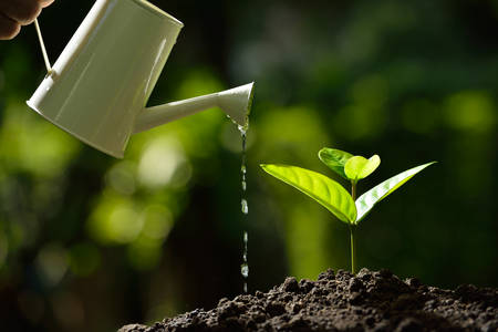 watered: Sprout watered from a watering can on nature background