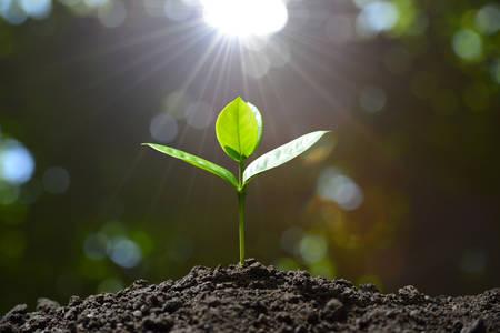 sembrando un arbol: Jóvenes de plantas en la luz de la mañana en el fondo de la naturaleza