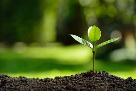 Jeune plante dans la lumière du matin sur fond de nature Banque d'images - 61242612