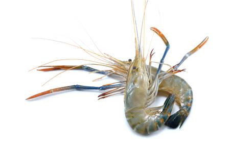 camaron: Fresh shrimps,prawns isolated on white background