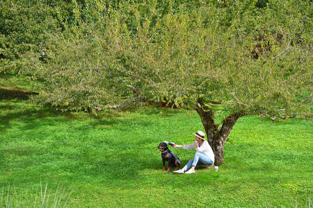 under tree: Woman sitting under a tree in the park with dog beside her