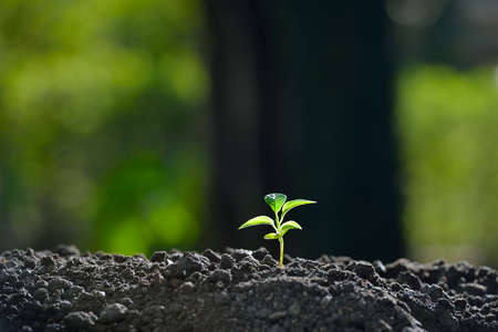 1: Young plant in the morning light on nature background Stock Photo