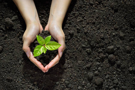 Руки держат и уход зеленый молодое растение Фото со стока