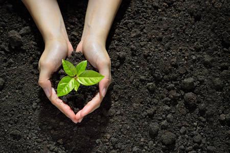 Hände halten und pflegen eine grüne junge Pflanze