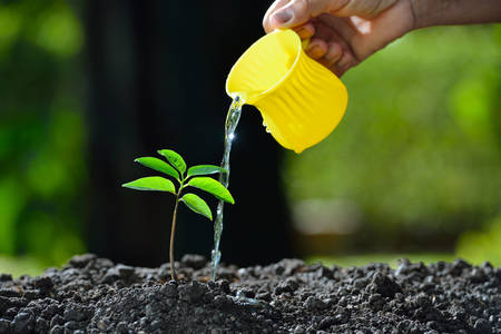 watered: Young plant watered from a watering can Stock Photo