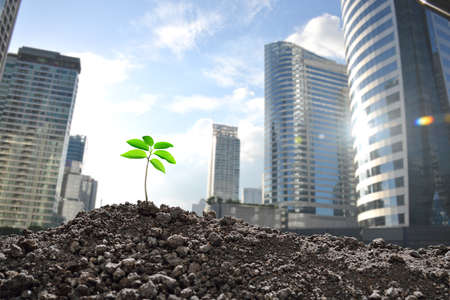 seed: Young plant growing in polluted city, Environmental concept Stock Photo