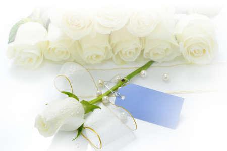 rosas blancas: rosas blanca flor hecha con filtros de color
