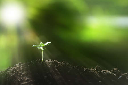 Young plant in the morning light on nature background 스톡 콘텐츠