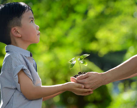 Two hands holding together a green young plant