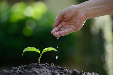 plant nature: Hand watering a young plant on nature background