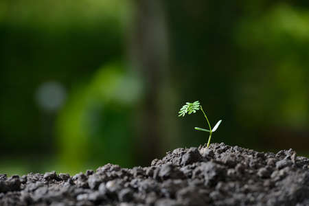 seeding: Young plant in the morning light on nature background Stock Photo