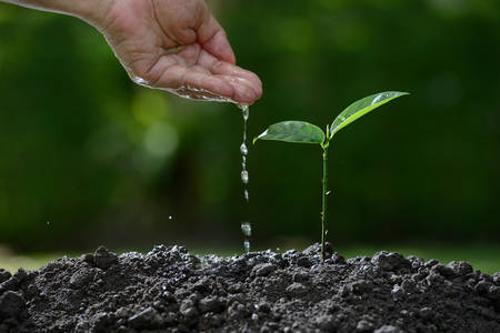 seeding: Farmers hand watering a young plant on nature background