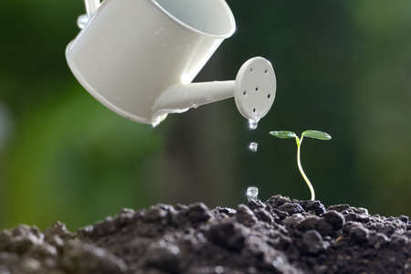 Sprout watered from a watering can on nature background