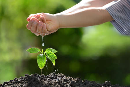 drop water: Childrens hands watering a young plant Stock Photo