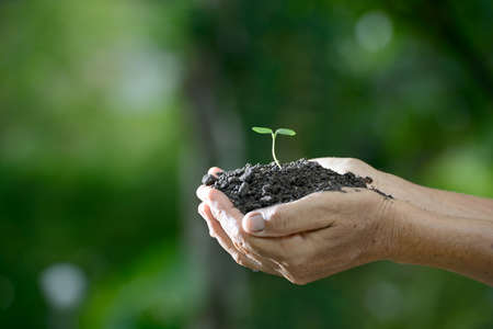 plant nature: Hands holding a green young plant in the morning light on nature background Stock Photo