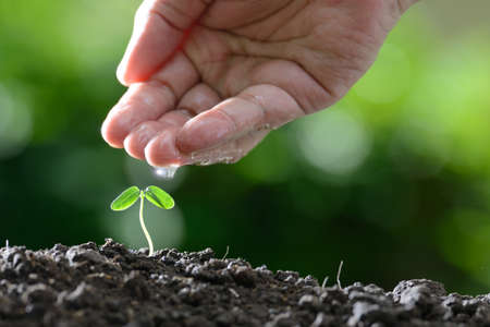 plant nature: Farmers hand watering a young plant on nature background