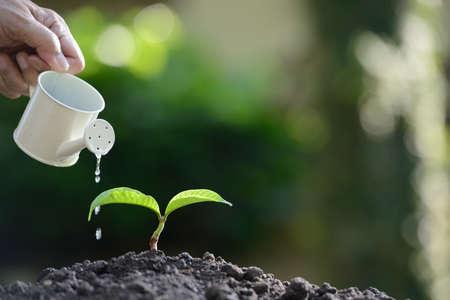 Sprout regado de una regadera en el fondo la naturaleza Foto de archivo - 78935633