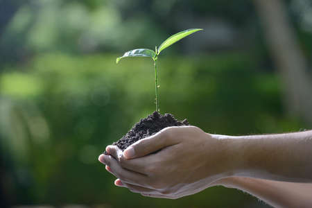 Hands holding a green young plant in the morning light on nature background Stock Photo