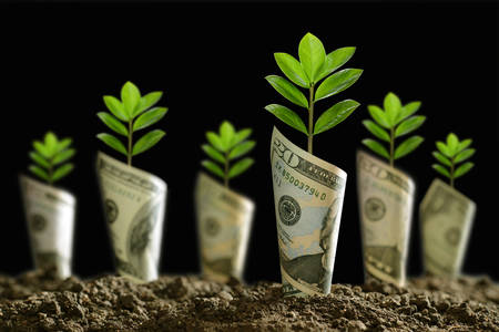 Image of bank notes rolled around plants on soil for business, saving, growth, economic concept on black background Stock Photo