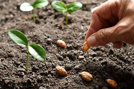 Farmers hand planting seed in soil