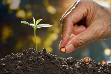 Farmer's hand planting a seed in soil Standard-Bild