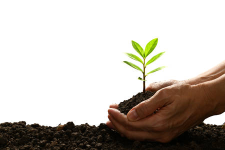 Hands holding and caring a green young plant isolated on white background Stock Photo
