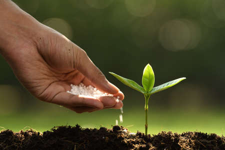 Hand giving chemical fertilizer to young plant on nature Standard-Bild - 114551950