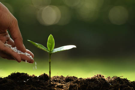 Hand giving chemical fertilizer to young plant on nature Standard-Bild - 114551955