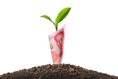 Image of China Yuan banknote with plant growing on top for business, saving, growth, economic concept isolated on white Stockfoto