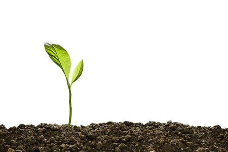 Grüner Spross wächst aus dem Boden isoliert auf weiß