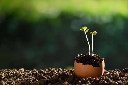 Green sprout growing out from soil in eggshells on nature