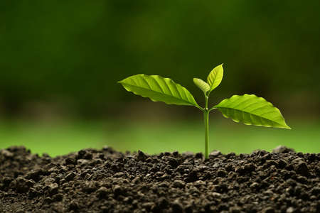 Young plant in the morning light on nature background Banque d'images - 157652396