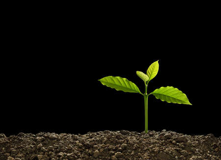 Green sprout growing out from soil isolated on black background Banque d'images - 157652227