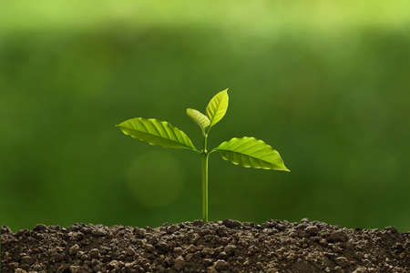 Young plant in the morning light on nature background Banque d'images - 157627130