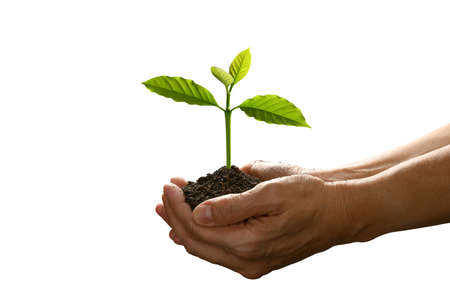 Hands holding and caring a green young plant isolated on white background Banque d'images
