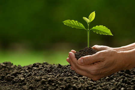 Hands holding and caring a green young plant on nature background