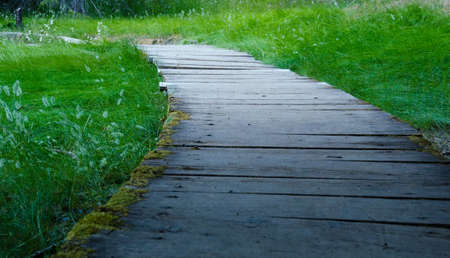 Wooden path across a grassy meadow