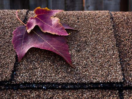 asphalt shingles: Red maple leaves on asphalt shingles