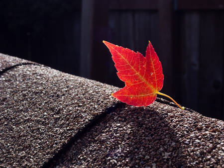 Red maple leaf on asphalt shingles photo