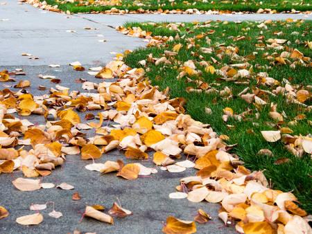 Autumn leaves on walkway and yard photo