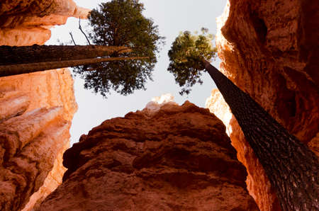 Trees growing from rocks in Bryce canyon