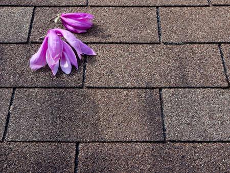 asphalt shingles: Pink and purple magnolia flowers on asphalt shingles roof Stock Photo