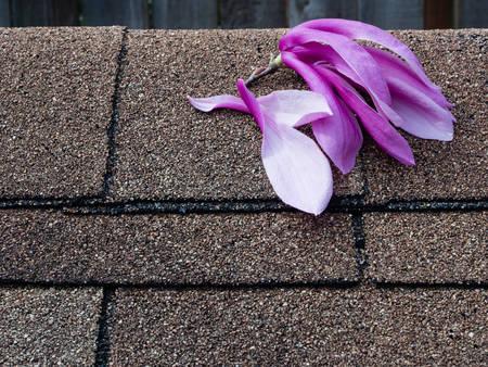 shingles: Flores de magnolia rosa y morados en las tejas de asfalto techo