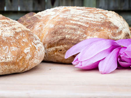 french boule: Two round french boule breads with magnolia flowers
