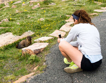 rocky mountain national park: Rocky Mountain National Park, USA - July 14, 2015: Girl taking picture of marmot with cellphone