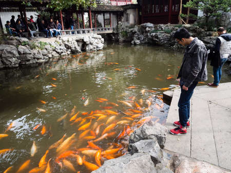 decorative fish: Shanghai, China - March 20, 2016: Decorative fish in a pond of Yuyuan garden